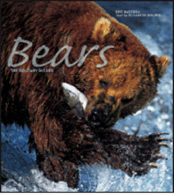 Bears by Elisabeth Baccega image