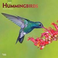 Hummingbirds 2019 Square Foil by Inc Browntrout Publishers