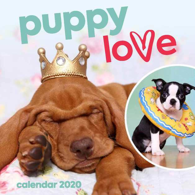 Puppy Love 2020 Square Wall Calendar
