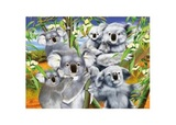 3D LiveLife Poster: Koala Cuddle