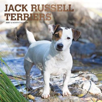 Jack Russell Terriers 2020 Square Foil Wall Calendar