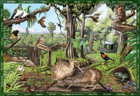 Holdson XL: 300 Piece Puzzle - Seek & Find (The Forest) image