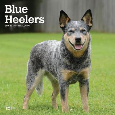 Blue Heelers 2019 Square by Inc Browntrout Publishers