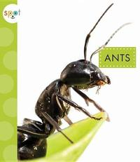 Ants by Nessa Black image