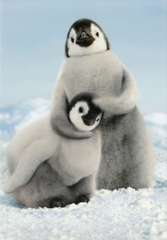 Avanti Greeting Card - Feel the Love Penguins