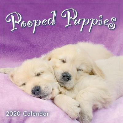 Pooped Puppies 2020 Calendar by Sellers Publishing