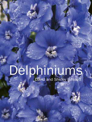 Delphiniums by David Bassett