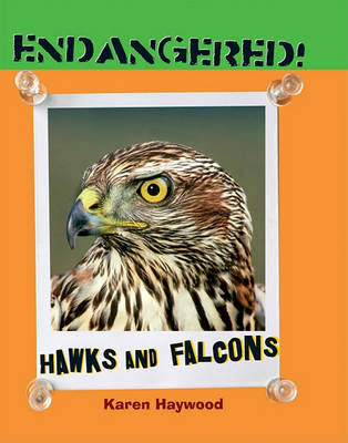 Hawks and Falcons by Karen Haywood