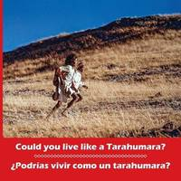 Could You Live Like a Tarahumara? podr as Vivir Como Un Tarahumara? Bilingual Spanish and English by Don Burgess