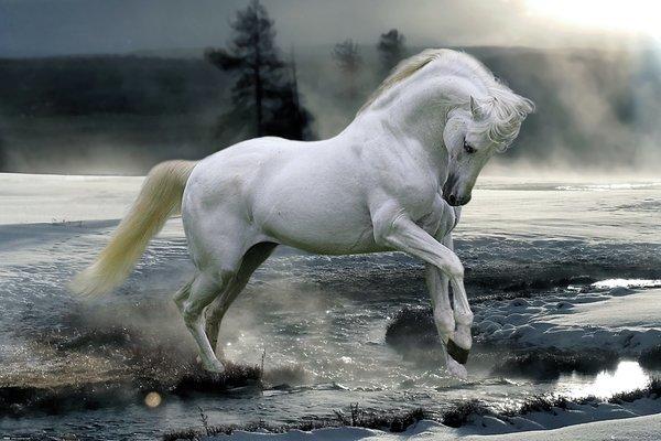 Bob Langrish Maxi Poster - Horse Snow (898)