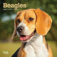 Beagles 2020 Mini Wall Calendar by Inc Browntrout Publishers