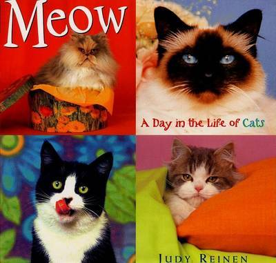 Meow a Day in the Life of Cats by Judy Reinen