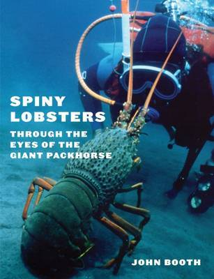 Spiny Lobsters: Through the Eyes of the Giant Packhorse by John Booth
