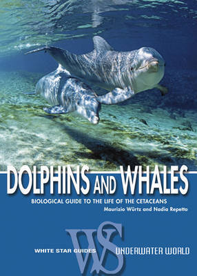 Dolphins and Whales by Maurizio Wurtz