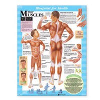 Your Muscles Chart image