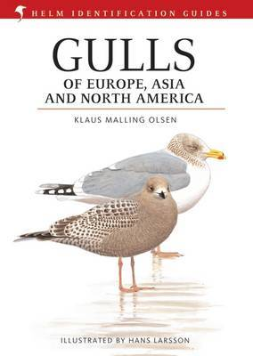 Gulls of Europe, Asia and North America by Klaus Malling Olsen image