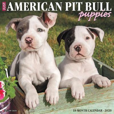 Just American Pit Bull Terrier Puppies 2020 Wall Calendar (Dog Breed Calendar) by Willow Creek Press