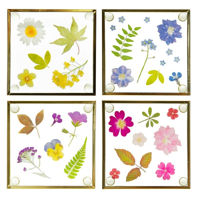 Sass & Belle: Glass Coasters - Pressed Flowers