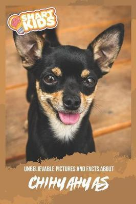 Unbelievable Pictures and Facts About Chihuahua by Olivia Greenwood image