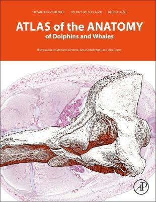 Atlas of the Anatomy of Dolphins and Whales by Bruno Cozzi