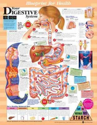 Your Digestive System Chart image
