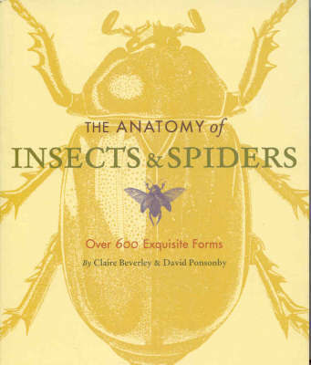 The Anatomy of Insects and Spiders by Claire Beverley