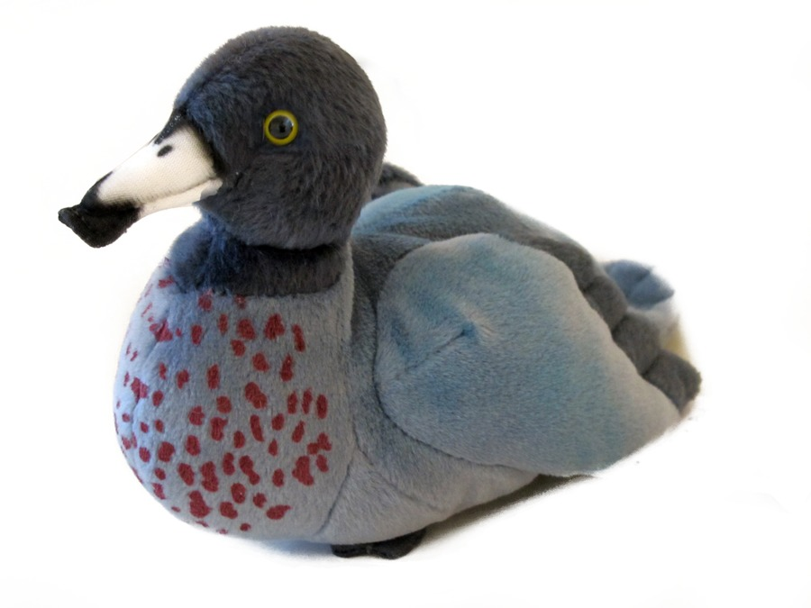 N.Z Blue Duck (Whio Whio) w/Sound 15cm image