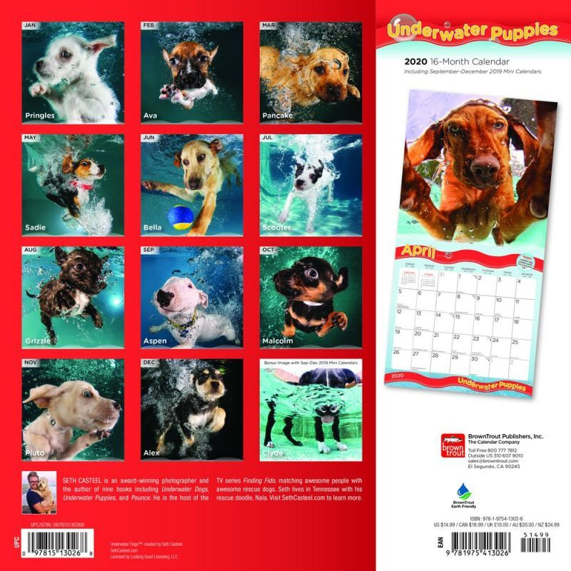 Underwater Puppies 2020 Square Wall Calendar image