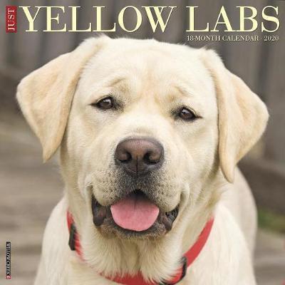 Just Yellow Labs 2020 Wall Calendar (Dog Breed Calendar