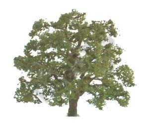 JTT: O Scale Scenic Live Oak - Single Pack image