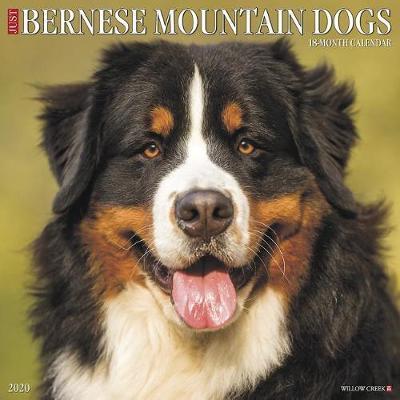 Just Bernese Mountain Dog 2020 Wall Calendar (Dog Breed Calendar) by Willow Creek Press