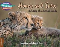 Honey and Toto: The Story of a Cheetah Family 1 Pathfinders by Jonathan Scott image