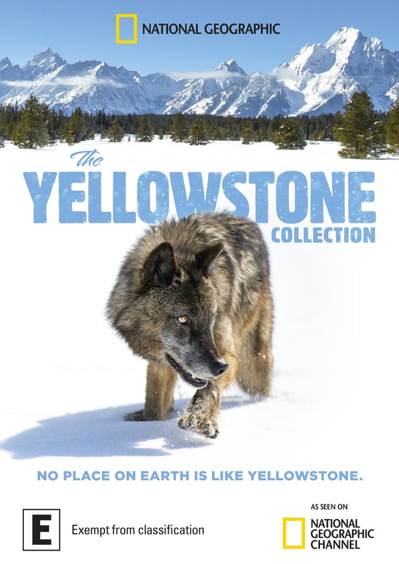 The Yellowstone Collection on DVD