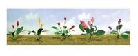 JTT: HO Scale Assorted Flower Plants 3 - 12 Pack