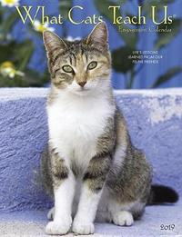 What Cats Teach Us 2019 Engagement Calendar by Willow Creek Press