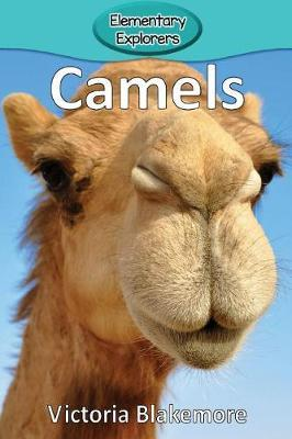 Camels by Victoria Blakemore