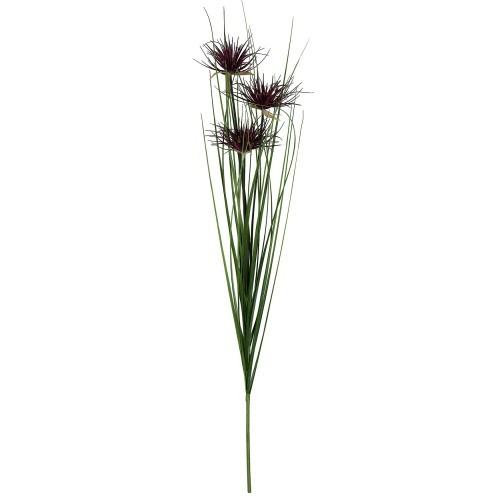Umbrella Onion Grass Stem