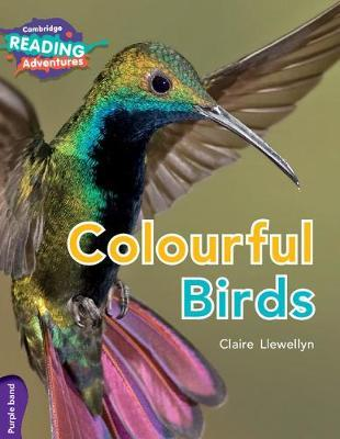 Colourful Birds Purple Band by Claire Llewellyn image