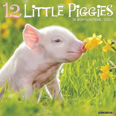 12 Little Piggies 2020 Wall Calendar by Willow Creek Press
