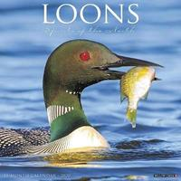 Loons 2020 Wall Calendar by Willow Creek Press