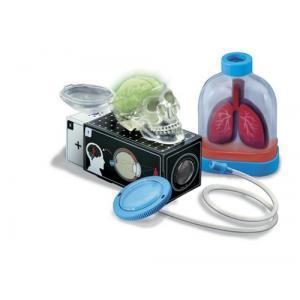 4M: Kidz Labs Human Organs