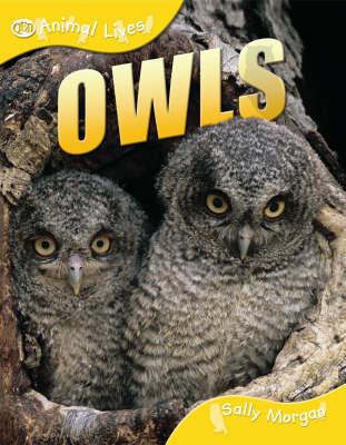 Owls by Sally Morgan