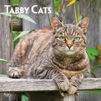 Tabby Cats 2019 Square Wall Calendar by Inc Browntrout Publishers