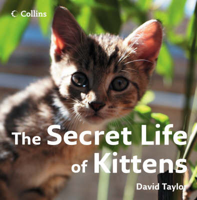 The Secret Life of Kittens by David Taylor image
