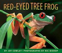Red-Eyed Tree Frog by Joy Cowley image