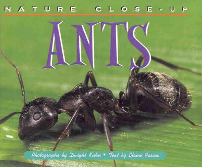 Ants by Elaine Pascoe