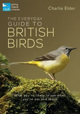The Everyday Guide to British Birds by Charlie Elder image