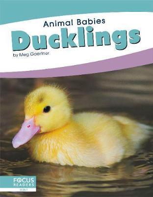 Animal Babies: Ducklings by Meg Gaertner