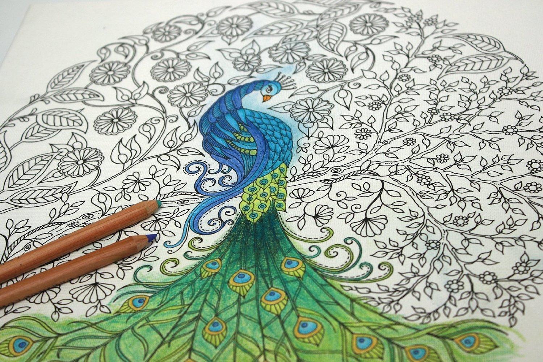 Secret garden colouring in book nz -  Johanna Basford Canvas 12x12 Secret Garden Peacock Image