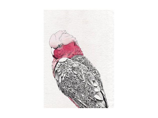 Maxwell & Williams: Marini Ferlazzo Birds Tea Towel - Galah